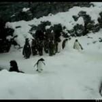 Mały pingwinek z ADHD