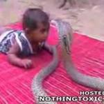 Dziecko bawi się z kobrą