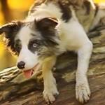Najfajniejszy pies na świecie