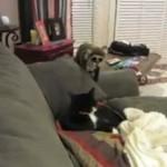 Jak przestraszyć kota?