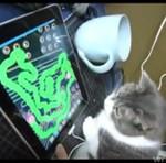 Kot bawi się iPadem!