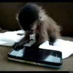 Typowy użytkownik iPhona!