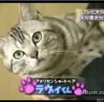 Tylko japońskie kotki tak potrafią!