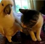 Papużki - nierozłączki?