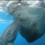 Rekin OKRADA rybaków!