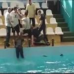 Zadyma w delfinarium!