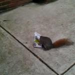 Ratowanie wiewiórki