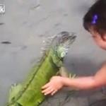 Niespodzianka wylazła z oceanu