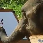 Słoń maluje... SŁONIA!