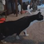 Przestraszone koty - ŚMIESZNE!