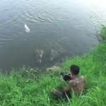Dokarmianie krokodyli w rzece