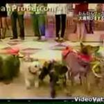Psy skaczące przez skakankę?!