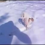 Ten pies nie znosi śniegu!