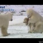 Niedźwiedź i pies - SŁODKIE!