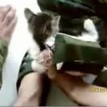 Żołnierze zrzucili kotka... ze spadochronem!