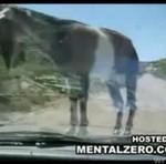 Koza TERRORYZUJE turystów!