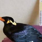 Ten ptak zna japoński!