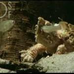 Żółw poluje - DOBRE!