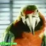 Papugi w sklepie