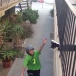 Kot przybija piątkę
