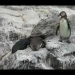 Wredny pingwin