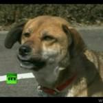 Japoński pies wyłowiony z morza wita się z właścicielką!