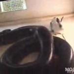 Kochasz króliczki?