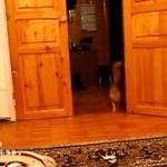 Ten kot boi się... dźwięków z Mario!