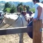 Jak nie wchodzić na konia?