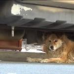 Sonia - pies uratowany dzięki Google Street View