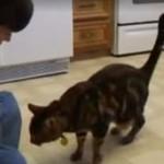 Kot wykonuje psie sztuczki