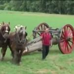 Koń vs 18 mężczyzn