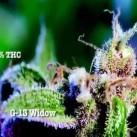 Najmocniejsze odmiany marihuany