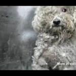 Historia ślepego psa - piękne!
