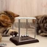 Koty uczą się fizyki