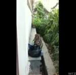 Małpa vs paparazzi