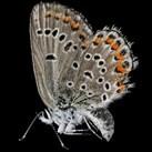 Insekty w wersji makro - PIĘKNE!