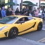 Niedźwiedź w Lamborghini