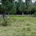 Spójrzcie na ten las - czy coś w nim nie gra?
