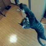 Jak wysoko skacze kot?