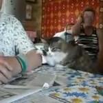 Kot UCZY właściciela, jak chce być głaskany!