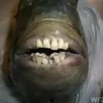 Ryba z LUDZKIMI zębami!