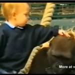 Dziecko bawi się z gorylem