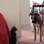 """""""You Shall Not Pass"""" - koty vs psy"""