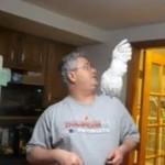 Papuga przedrzeźnia właściciela!