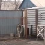 Nie chcemy nic mówić, ale ten pies tańczy lepiej niż Ty!