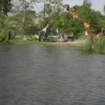 Skok do wody z wykorzytaniem koparki - AUĆ!