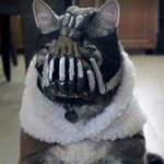Powrót kota Bane