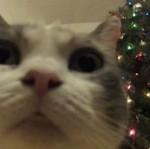 Czego kotki pragną na Święta?
