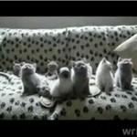 Banda kociaków ogląda mecz tenisowy!
